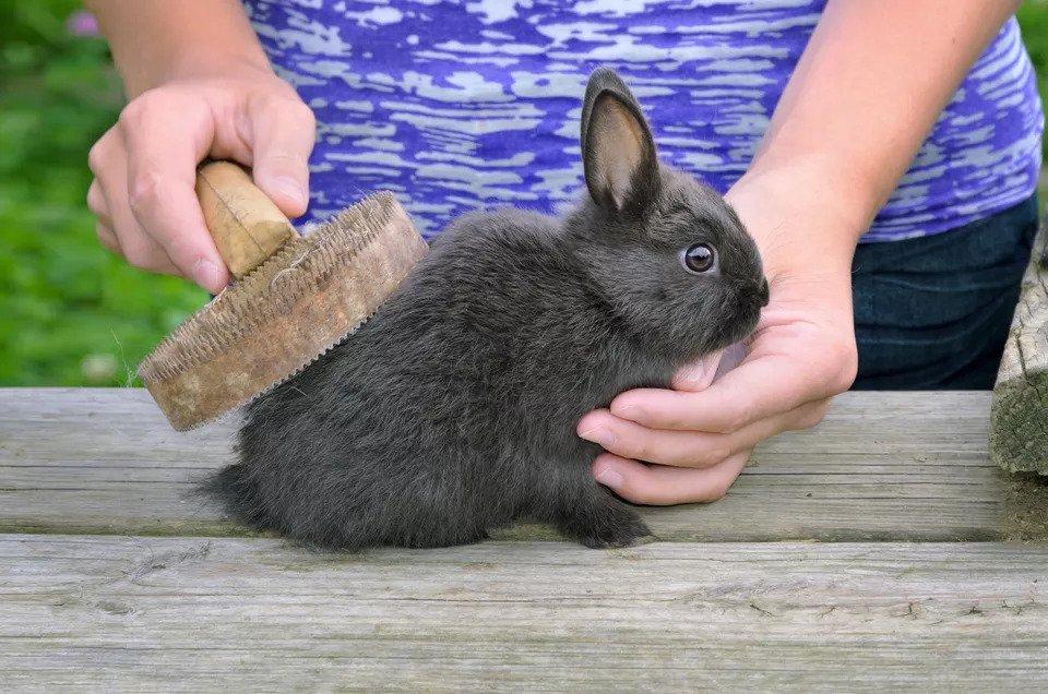 Con thỏ
