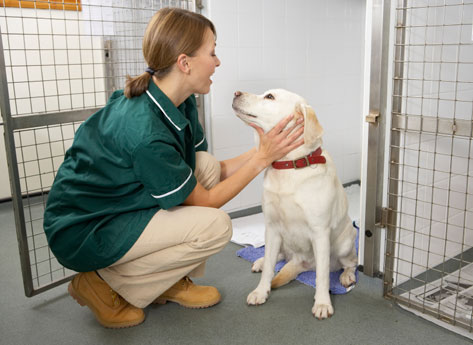 nguyên tắc vàng chăm sóc cún cưng