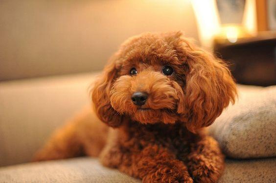 Những lợi ích tuyệt vời mà việc nuôi chó đem lại