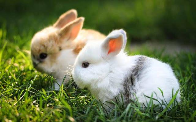 Tại sao thỏ bị ngứa? Tìm hiểu nguyên nhân bị chấy, ve hoặc bọ chét