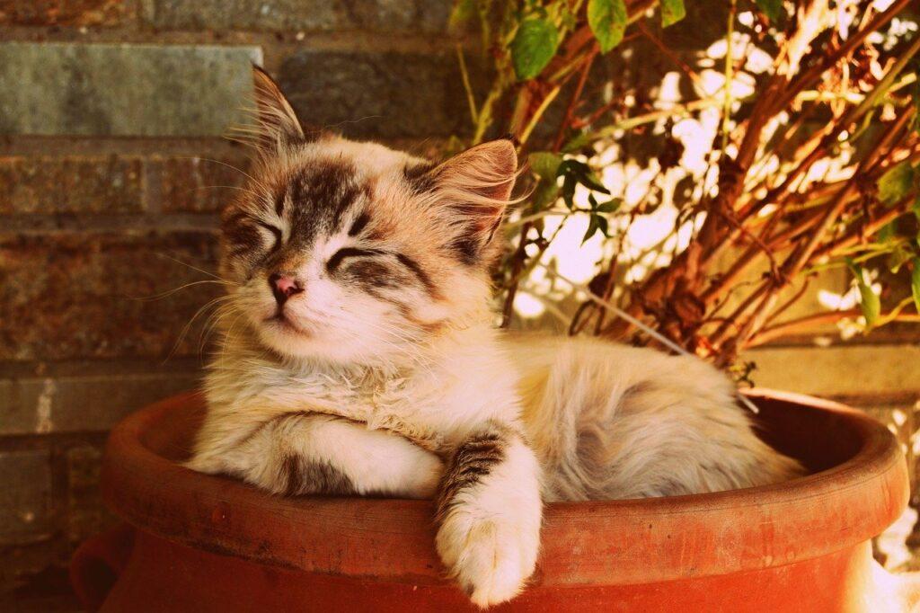 Mèo chảy nước dãi là điều thường thấy