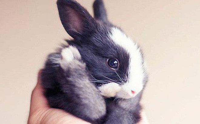 Tìm hiểu về chứng động kinh ở thỏ, nguyên nhân và cách xử trí