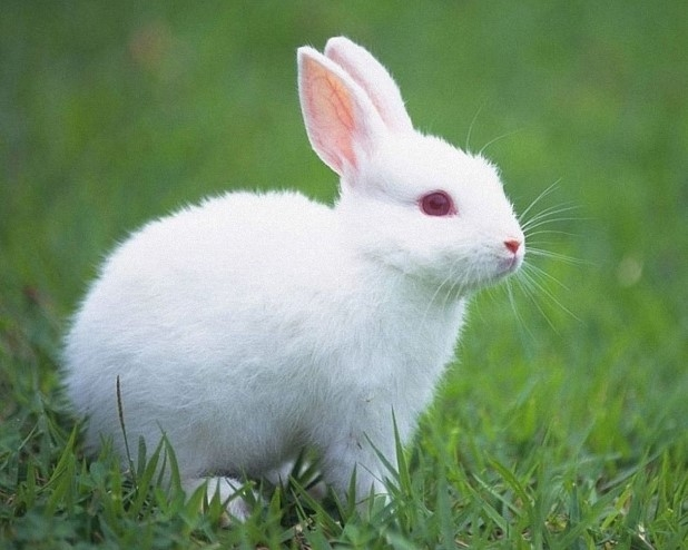 Tại sao thỏ ngứa và gãi? Dấu hiệu của bệnh chứ chẳng đùa được đâu!