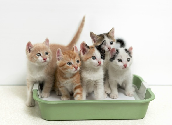 Review các loại cát vệ sinh cho mèo