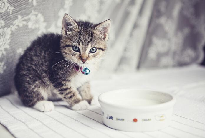 Review các loại sữa cho mèo con và mèo sơ sinh