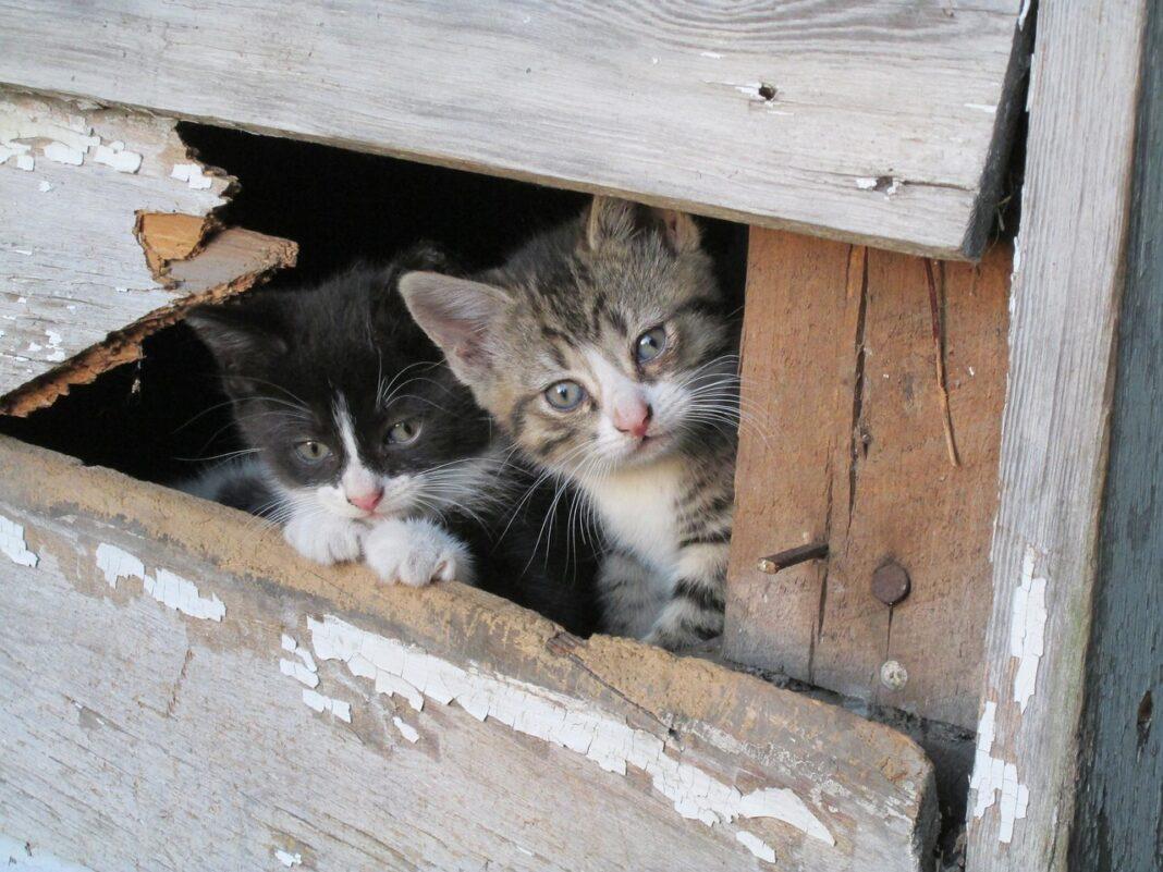 Mua nhà cho mèo
