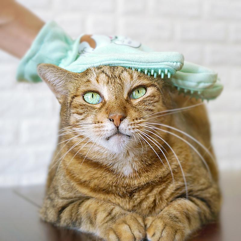 chăm sóc da và lông mèo