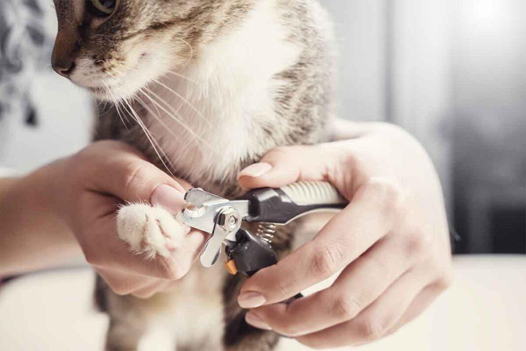 Cách cắt móng cho mèo an toàn