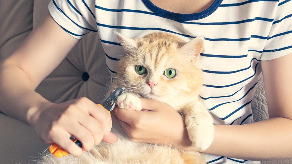 Tư thế cắt móng cho mèo đúng cách