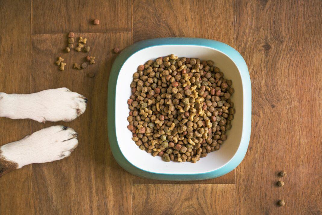 thức ăn cho chó tốt nhất 2021