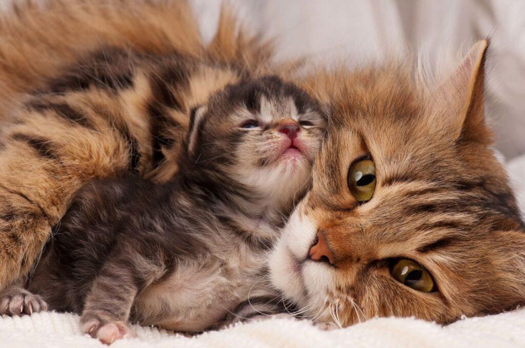 Lý do mèo mẹ ăn thit mèo con