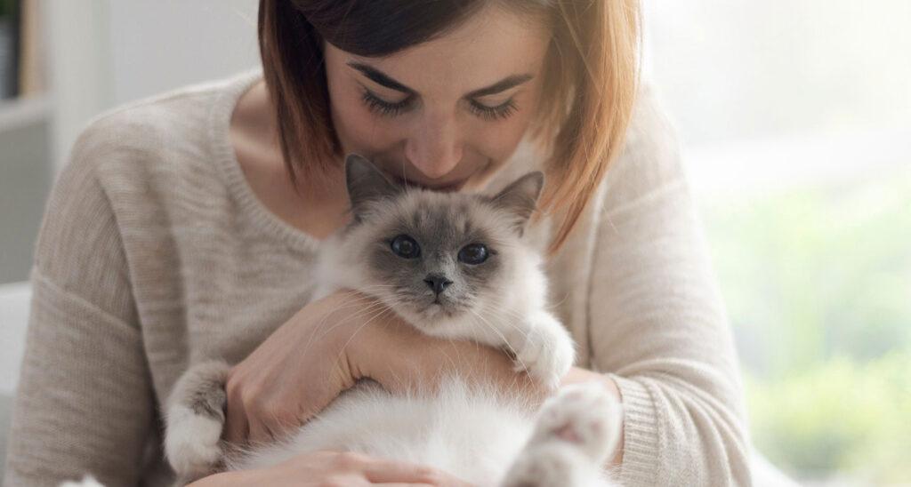Quan tâm vuốt ve mèo để chúng không bỏ nhà đi bụi