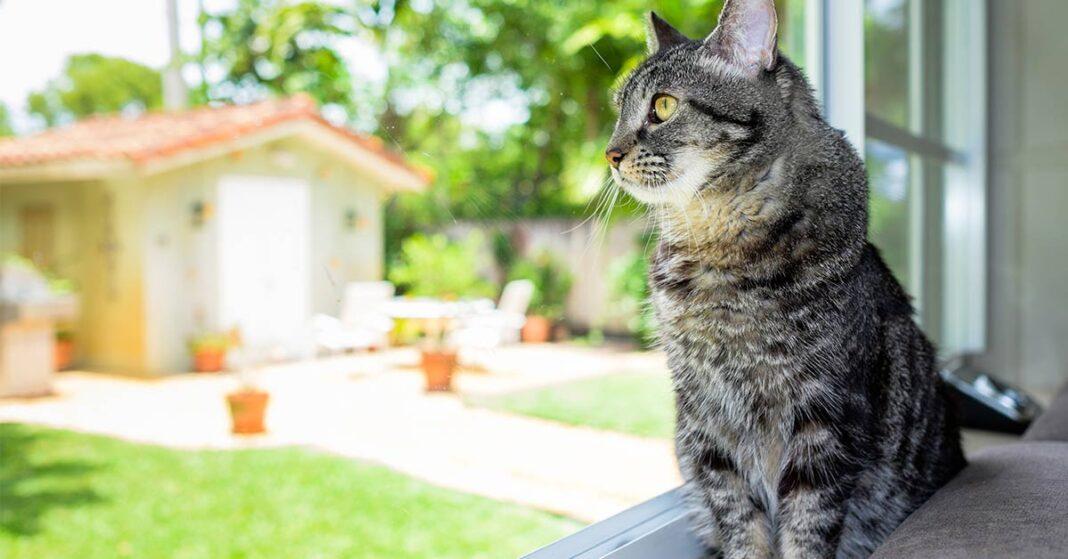 Tại sao mèo bỏ nhà đi bụi
