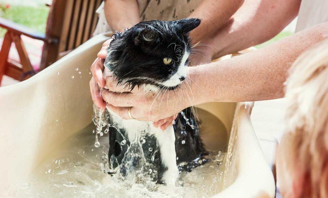 Tại sao mèo sợ nước