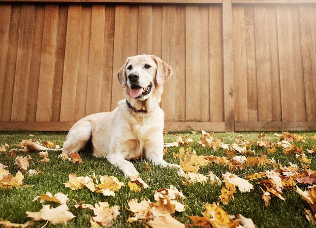Tại sao cần tẩy giun cho chó