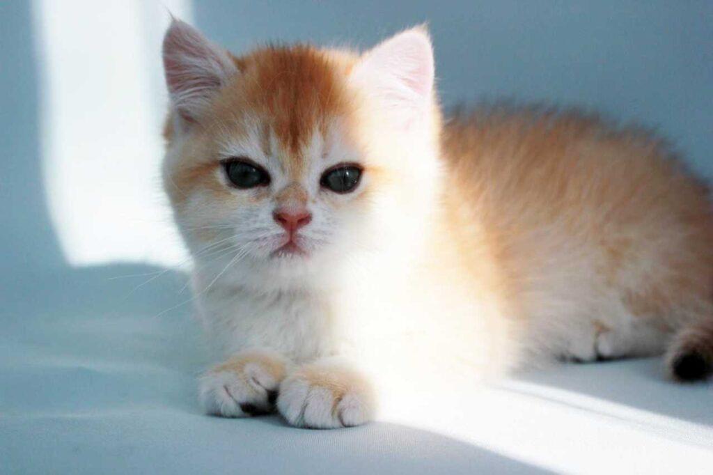 Đặt tên cho mèo hay và ý nghĩa