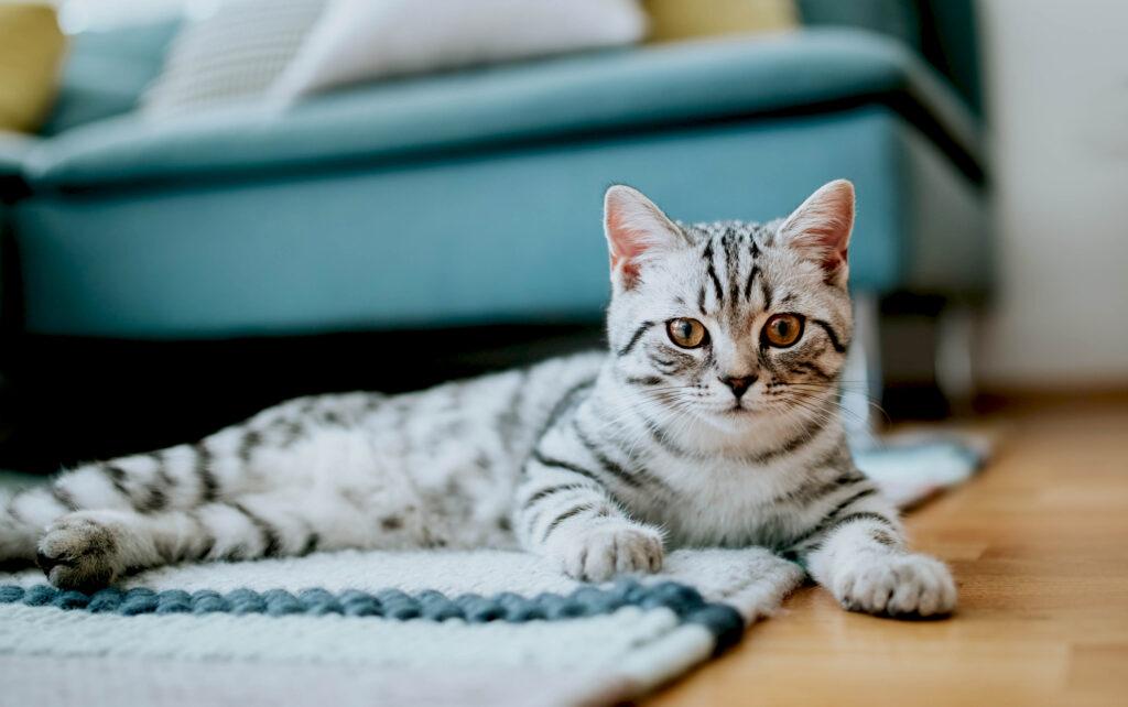 Đặt tên cho mèo