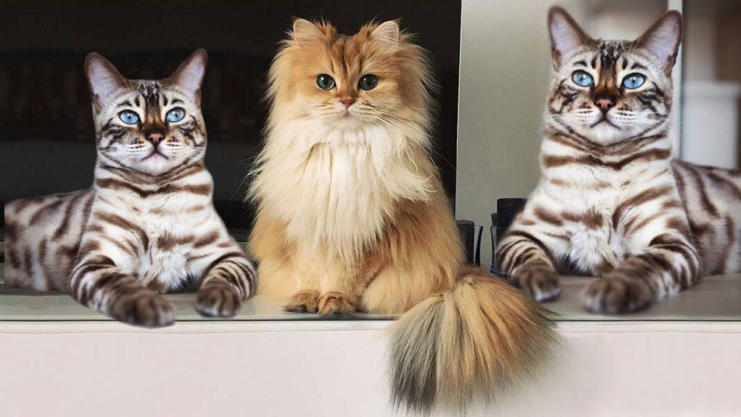 Cách nhận biết mèo khôn