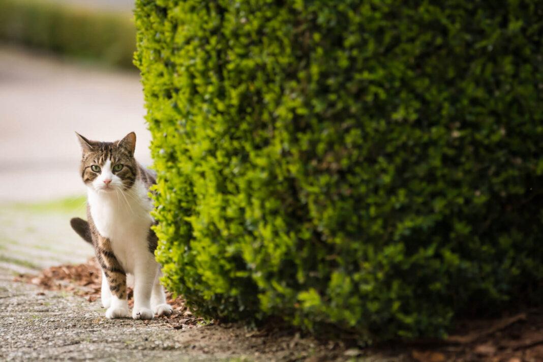 Những điều cần lưu ý khi mèo đi lạc