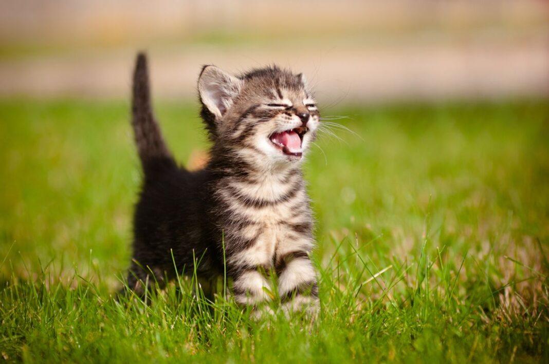 Đặt tên cho mèo ý nghĩa