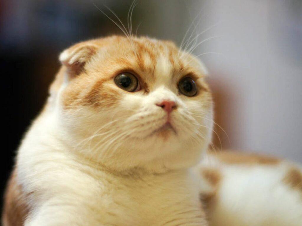 Top các giống mèo dễ nuôi