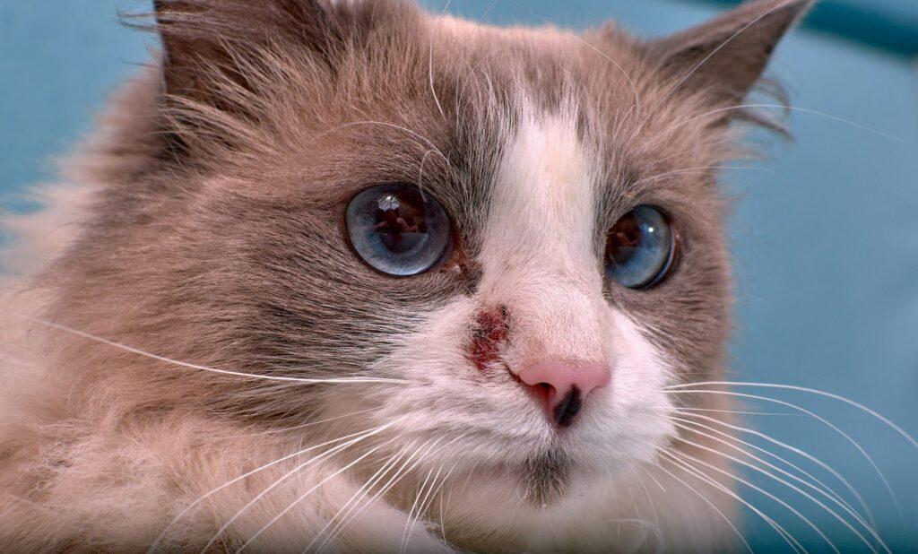 Thuốc trị nấm cho mèo