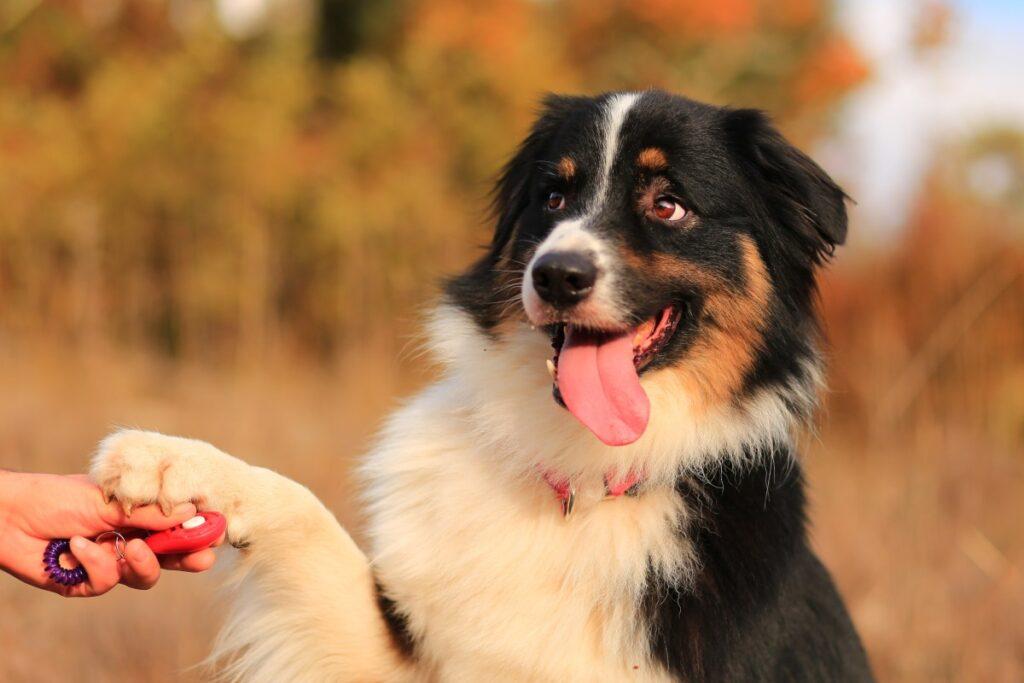 Hướng dẫn sử dụng clicker huấn luyện chó